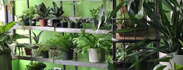 Cultivate Urban Rainforest is one of Orte, die Marco gefallen.