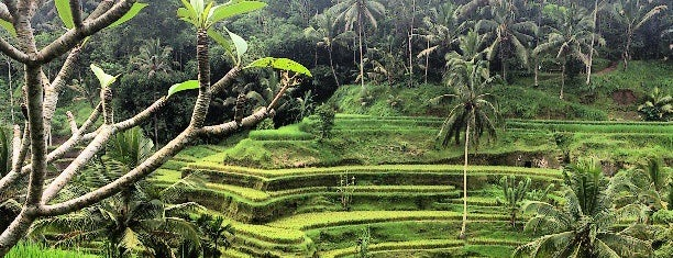 Tegallalang Rice Terraces is one of Ubud.