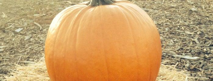 Elwood Pumpkin Farm is one of Locais salvos de Jonathan.