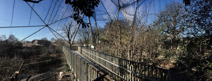 Snowdon Aviary is one of London, somewhat....