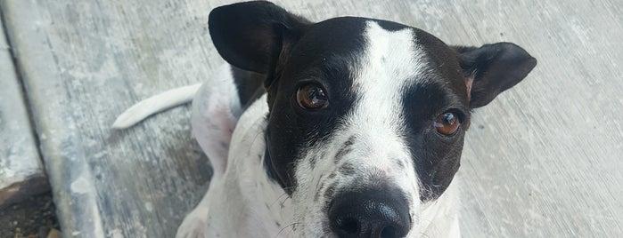 veterinaria ix-chel is one of Posti che sono piaciuti a Tazy.