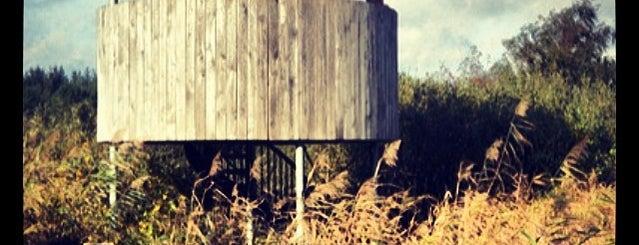 Vogelspothut de Liskes is one of To do in #bergeijk city by Ruudjeve.