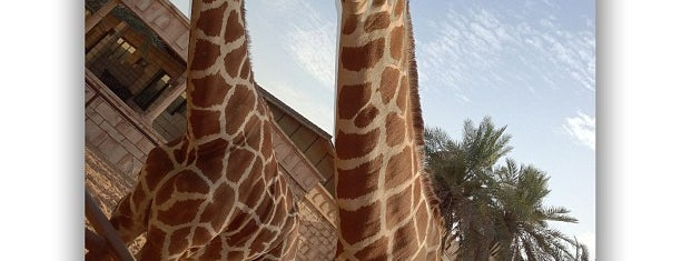 Emirates Park Zoo is one of Kids In UAE.