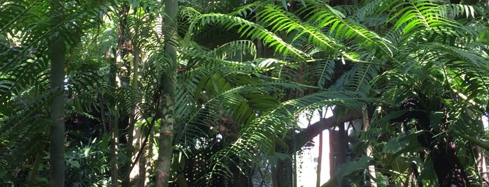 The Forest สวนป่าคาเฟ่ is one of พะเยา แพร่ น่าน อุตรดิตถ์.