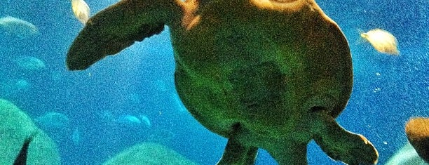 Tennessee Aquarium is one of Aquariums of the US.