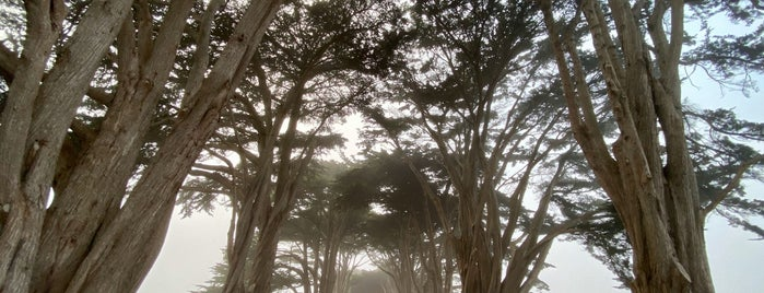 Cypress Tree Tunnel is one of San Francisco.