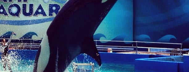 Killer Whale Show is one of Florida.