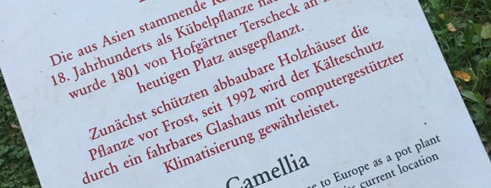 Pillnitzer Kamelie is one of Pillnitz Dresden 5/5🇩🇪.