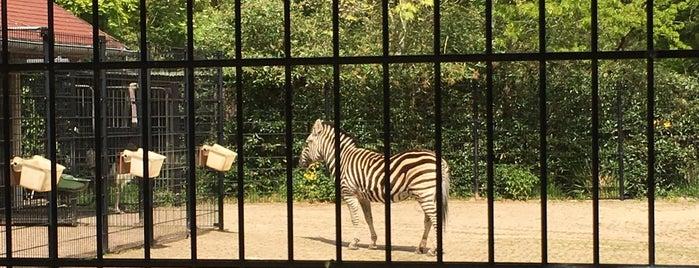 Zebra's & Struisvogels is one of Diergaarde Blijdorp 🇳🇬.