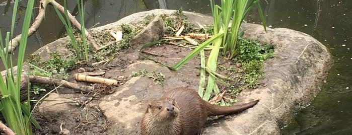 Otters is one of Diergaarde Blijdorp 🇳🇬.
