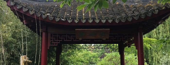Chinese tuin is one of Diergaarde Blijdorp 🇳🇬.
