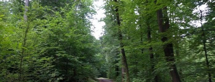 Wald is one of Orte, die Breck gefallen.