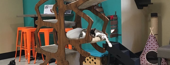 Orlando Cat Cafe is one of Tempat yang Disukai HECTOR.