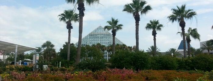 Moody Gardens Aquarium Pyramid is one of Tempat yang Disukai Lauren.