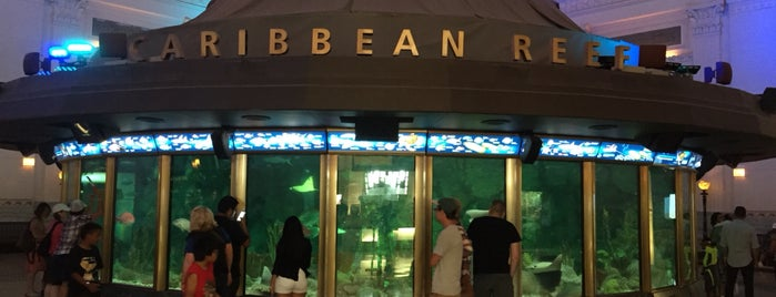 Shedd Aquarium is one of Jonさんのお気に入りスポット.
