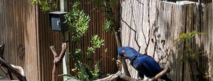 Wildlife Theater is one of Zoos/Aquariums in CA.