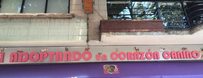 Adoptando un Corazón Canino. is one of Distribuidores DoGift.