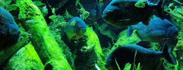 New York Aquarium is one of NYC - Best of Brooklyn.