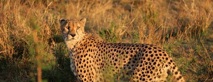Maasai Mara National Reserve is one of Locais curtidos por Aaron.