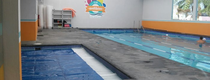 club de natación Anfibios is one of Tempat yang Disukai Marteeno.