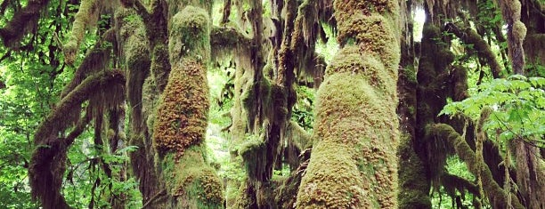 Hoh Rainforest is one of CBS Sunday Morning.