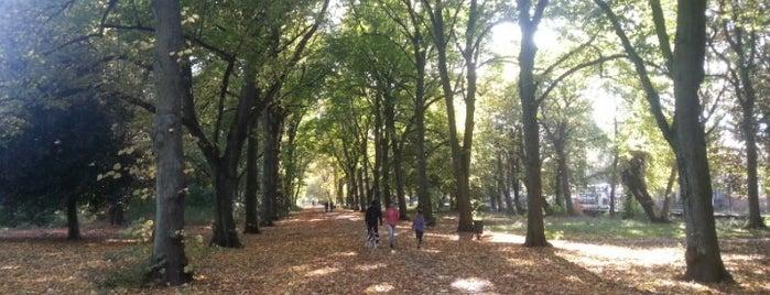 Alexandra Park is one of Манчестер.
