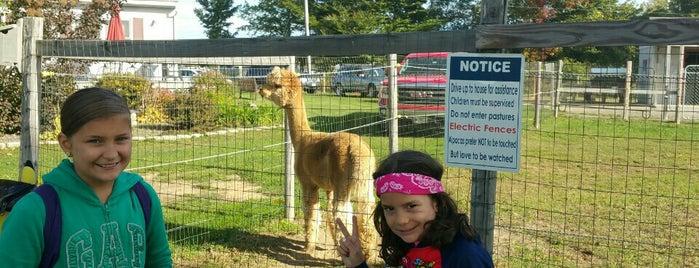 Northern Solstice Alpaca Farm is one of Orte, die Dana gefallen.