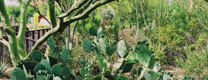 Desert Botanical Garden is one of สถานที่ที่ María ถูกใจ.