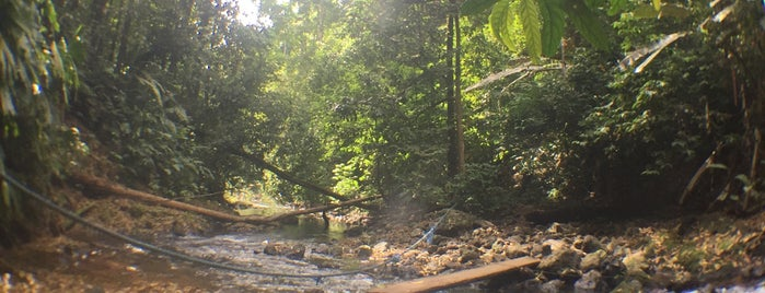 Reserva Forestal Golfo Dulce is one of Costa Rica.