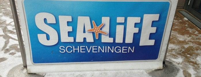 Sea Life is one of Orte, die Alika gefallen.