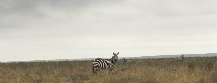 Nairobi National Park is one of 2018 Safari Adventure.