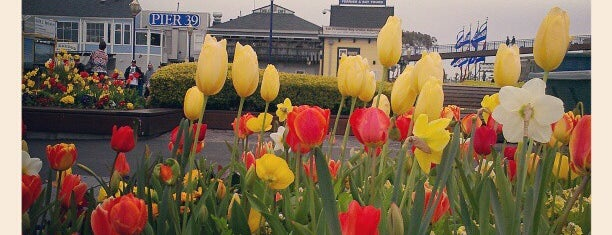 Tulipmania at Pier 39 is one of San Francisco, CA Spots.