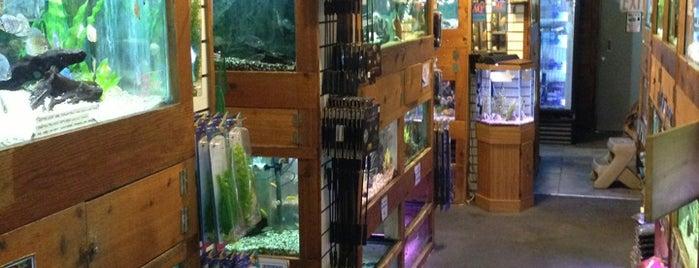 A World of Fish is one of Tempat yang Disukai leis.