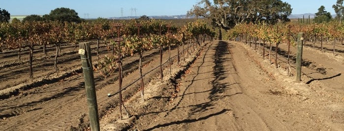 Oak Shadow Vineyards is one of Wineries & Breweries.