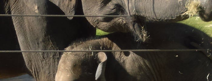 Houston Zoo is one of Tempat yang Disukai Regina.