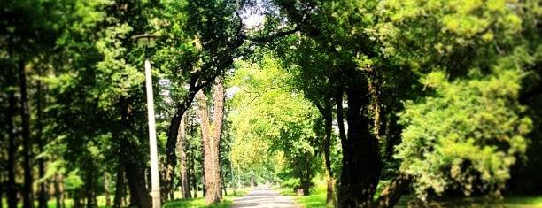 Stadtpark Rotehorn is one of Tempat yang Disimpan Sebastian.