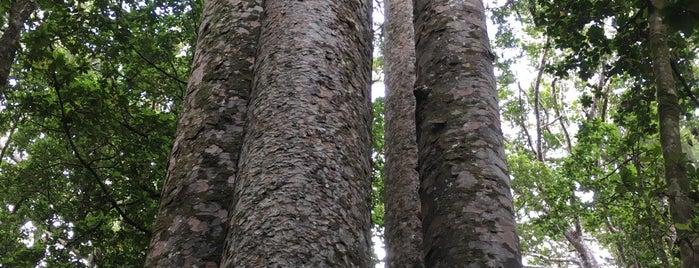 Waipoua Forest is one of Nuova Zelanda.