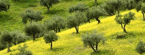 Cluster Bio-Mediterraneo - Salute, bellezza e armonia is one of Expo Milano 2015.