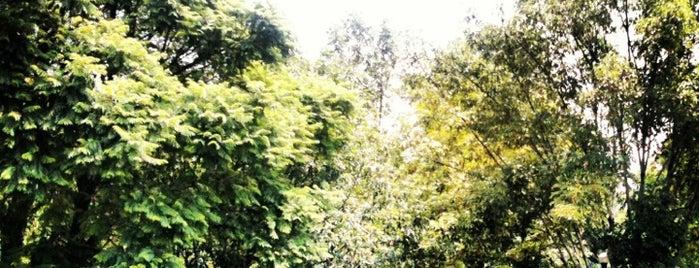 Parque De Coyoacán is one of Tempat yang Disukai Adriana.