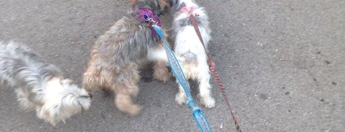 St. James Park Dog Run is one of My Good Dog NYC: NYC Dog Runs.