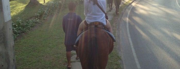 Phuket International Horse Club is one of สถานที่ที่ Paolo ถูกใจ.
