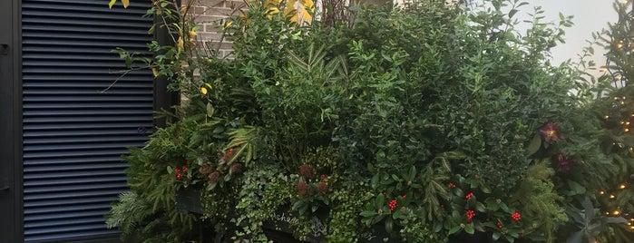 Petersham Nurseries is one of Frankie Friendly.
