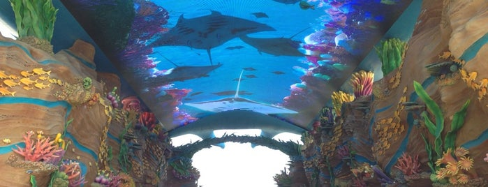 Chimelong Ocean Kingdom is one of Keith's Liked Places.