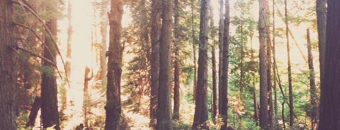 Gazzam Lake is one of Camping/Hiking in Western Washington.