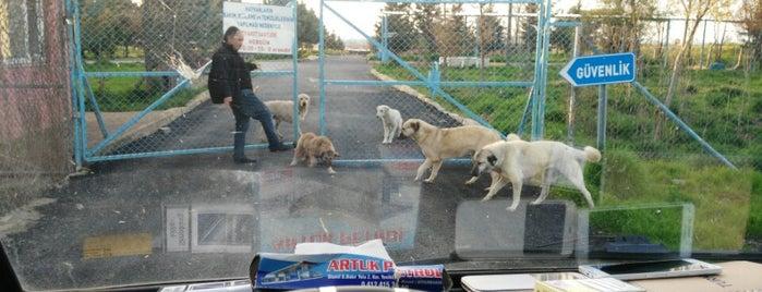 Diyarbakır Büyükşehir Belediyesi Hayvan Bakım ve Rehabilitasyon Merkezi is one of Diyarbakır'daki Veteriner Listesi.