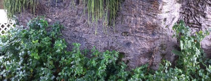 Baobá is one of Viagem.