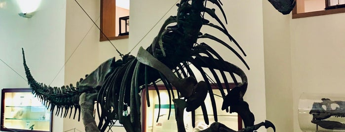 Museo di Paleontologia is one of NAPLES - ITALY.