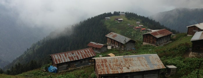 Pokut Yaylası is one of RİZE.