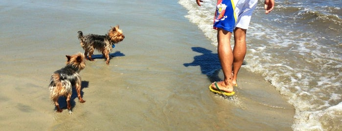 Dog (Malibu) Beach Longport is one of Dog friendly.