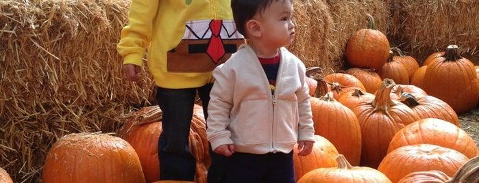 Irvine Park Railroad Pumpkin Patch is one of Leonardoさんのお気に入りスポット.